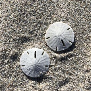 beach1.jpg - 44kB