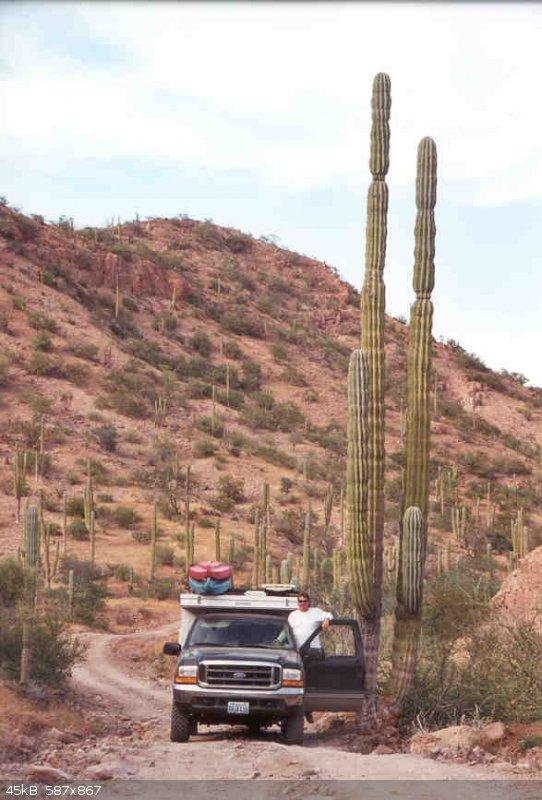 Big Cactus.jpg - 45kB