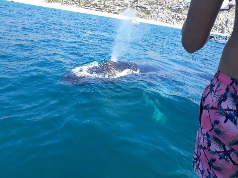 Whale resize 1.jpg - 171kB