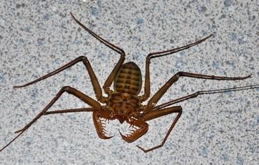 bug1.jpg - 103kB