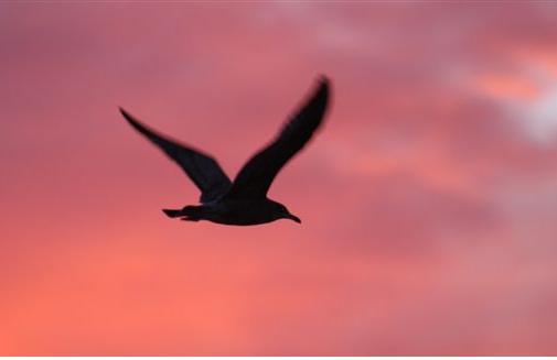 independence  seagull.JPG - 14kB