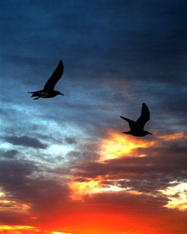 independence sunset.jpg - 27kB