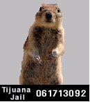 squirrel-portrait-banff-sw.jpg - 5kB